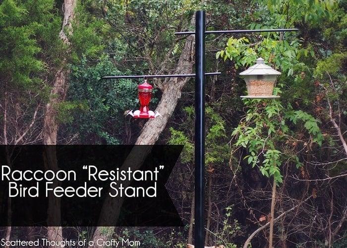 Make your bird feeder raccoon proof.