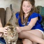 Why You should Adopt an Older Cat and What to Know Before Them Home