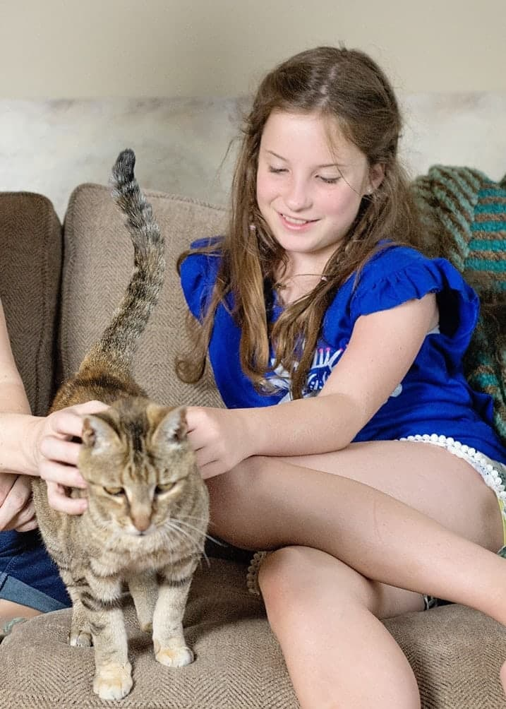 Why You should Adopt an Older Cat (& What to Know Before Bringing Them Home)