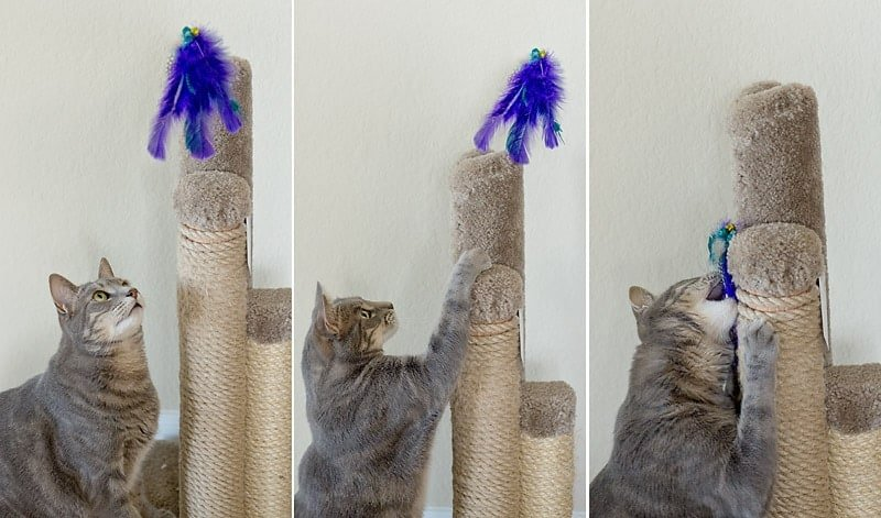 How to make a Feathered Cat Toy