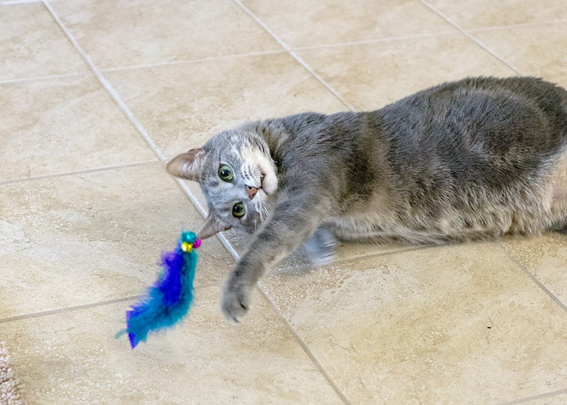 How to make a Feathered Cat Toy for your feisty feline!