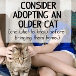Why you should consider adopting an older cat (and what you should know before bringing them home.)