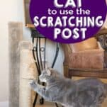 Kitty scratching on the furniture?These five tips on how to get your cat to use the scratching post are just what you need!