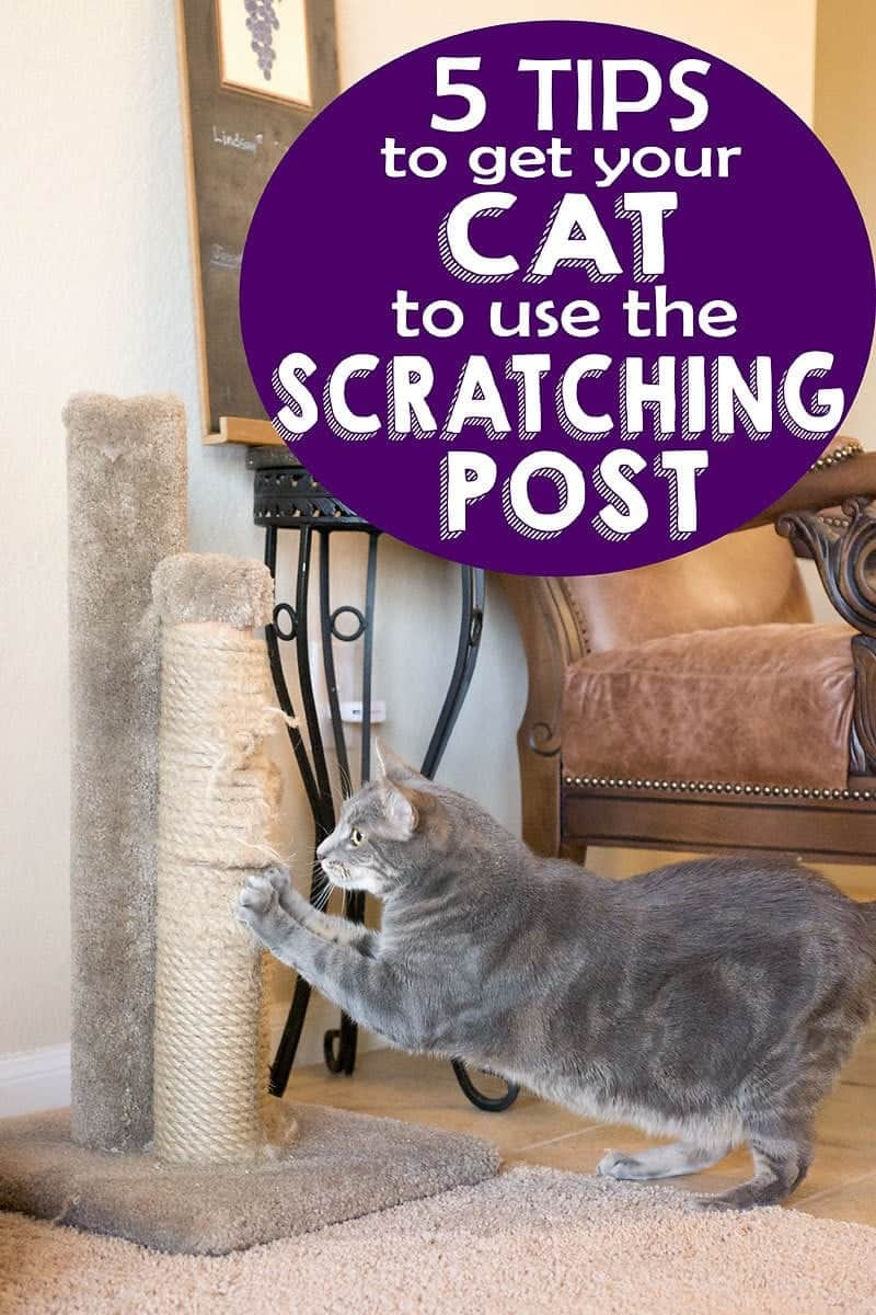 Kitty scratching on the furniture? These five tips on how to get your cat to use the scratching post are just what you need!