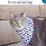 DIY Cat Outfit Sewing Tutorial (w/ Free downloadable pattern!)