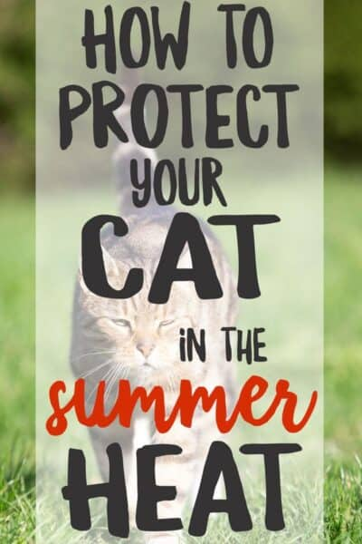 These easy but essential warm weather safety tips for cats will help you protect cats from the summer heat and keep them healthy and happy.