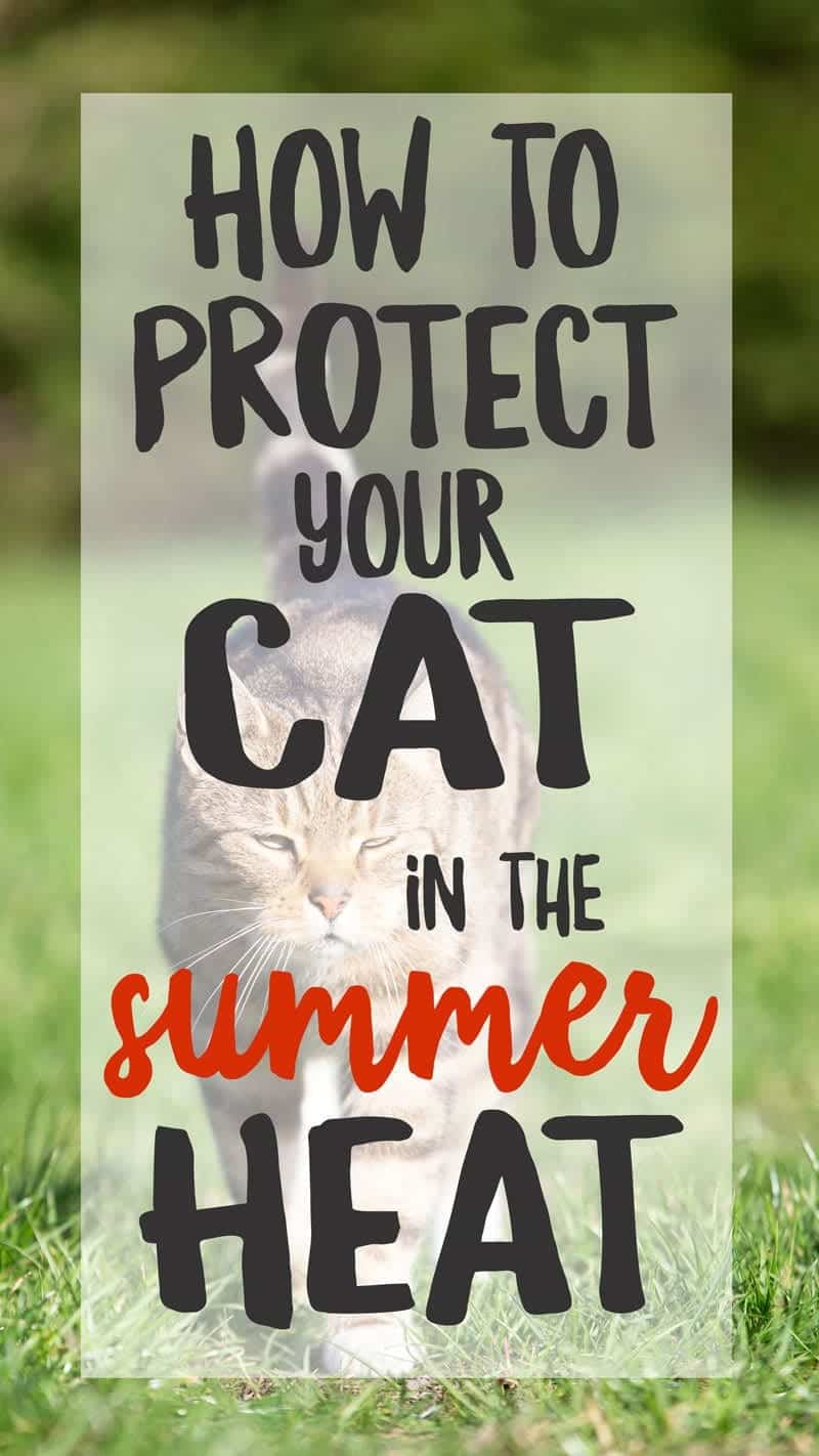 5 Ways To Protect Your Cat In The Summer Heat