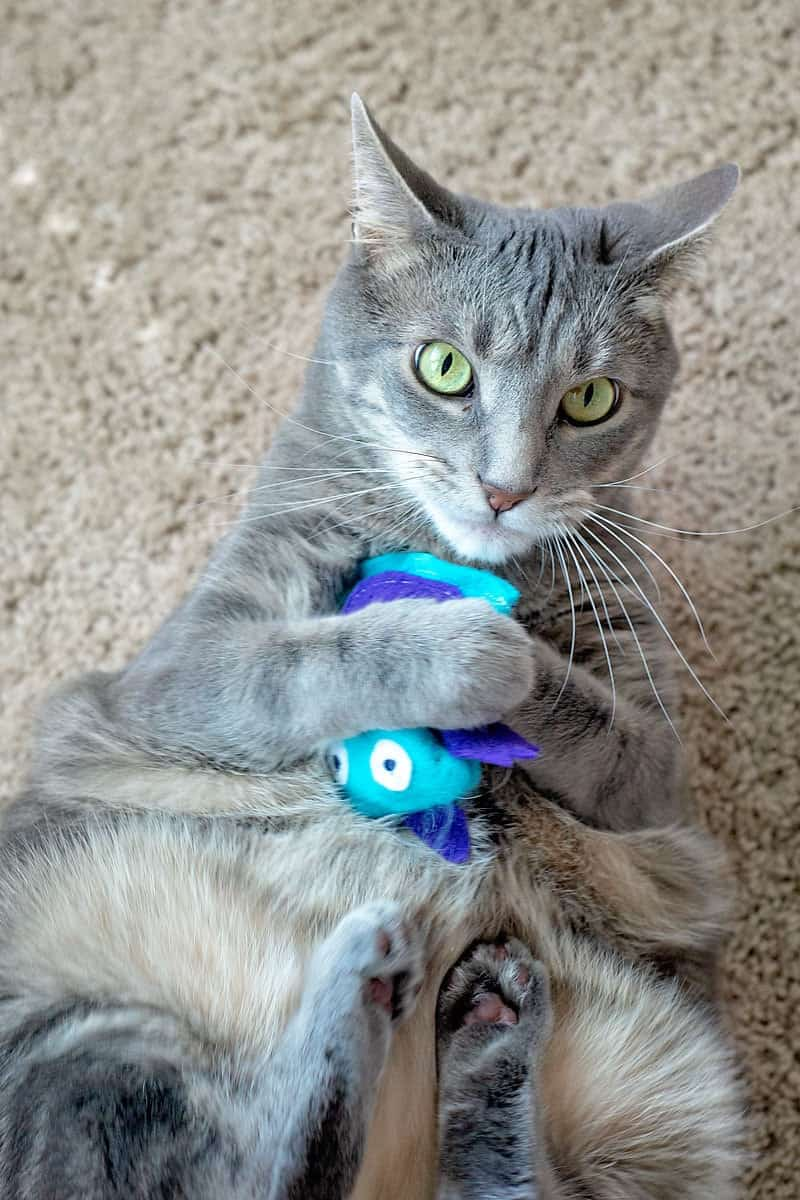 DIY Catnip Toy